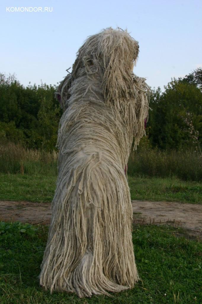 Дрессировка собак СанктПетербург СПб